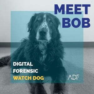 Meet Bob ADF Solutions Digital Forensic Watch Dog